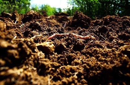 compost organic soil south africa