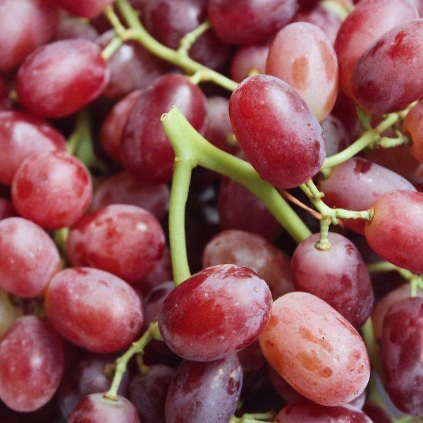 Crimson Seedless Red Grape cape town